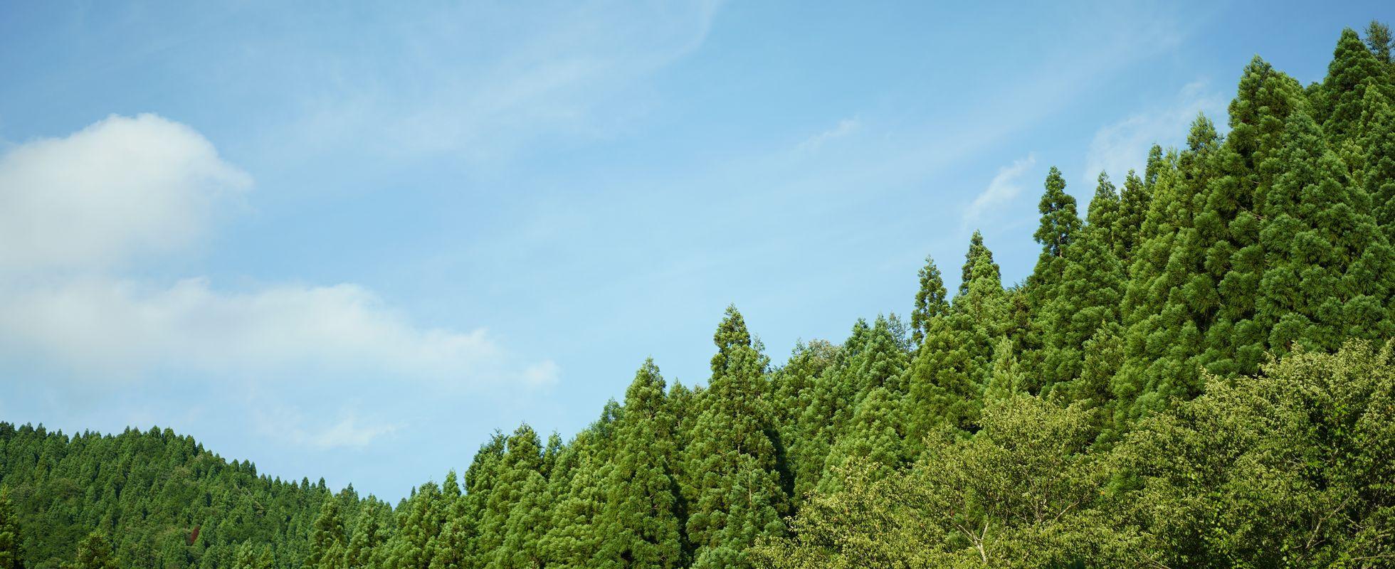 2.霊山として大悲山